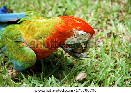 Exotic colorful African macaw parrot, beautiful close up on bird face over natural background