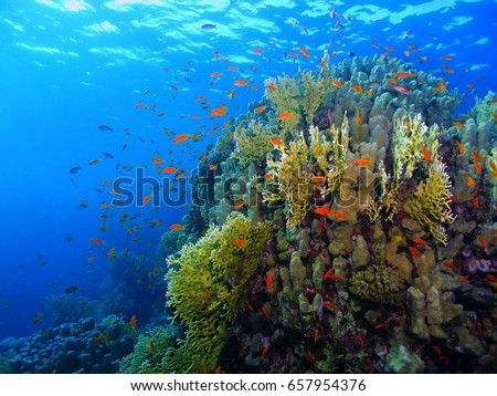 Exotic colorful rich tropical underwater coral reef. Snorkeling with school of color fish. Red coral reef fish. Scuba diving on the shallow aquatic reef.