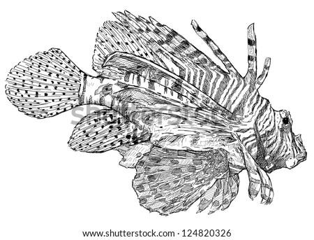 Exotic Fish Stock Vector 124820320
