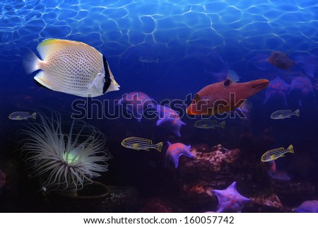 Exotic fish - stock photo