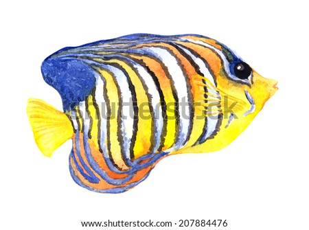 Exotic fish (tropical angelfish). Watercolour