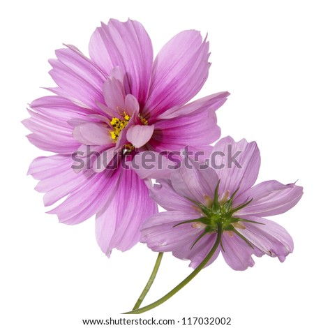Exotic flowers.Flora card - stock photo
