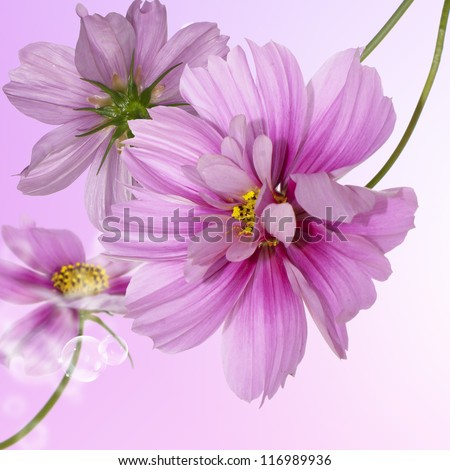 Exotic flowers.Floral beautiful card