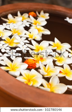 exotic flowers Plumeria in the water - stock photo