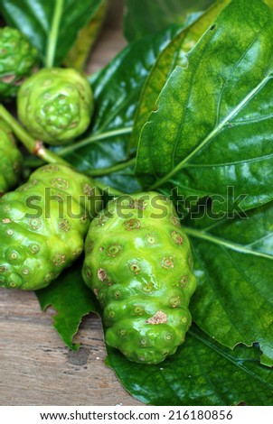 exotic fruit / great morinda, Indian mulberry, beach mulberry, Tahitian noni , noni, nono, meng kudu, nonu , ach