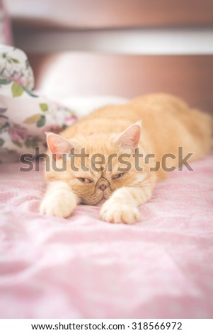 Exotic ginger cat playfully laying on bed - stock photo