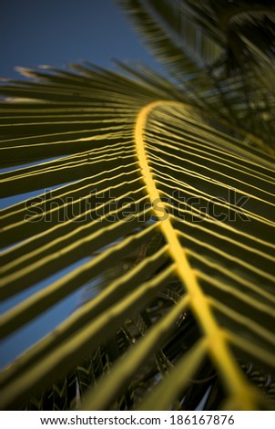 Exotic green palm tree leaf as vacation concept - stock photo