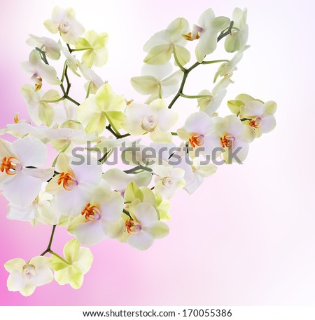 Exotic Japanese flower orchid.Beauty floral Card