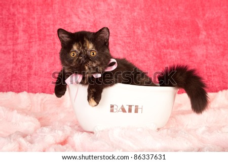 Exotic kitten lying in miniature white bath tub on pink background - stock photo