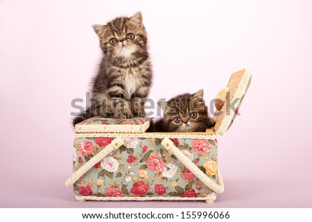 Exotic kittens sitting inside basket on lilac pink background - stock photo
