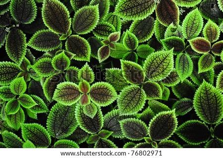 exotic leaf background - stock photo