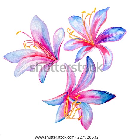 exotic lily flowers painting in watercolor isolated on white. single elements. - stock photo