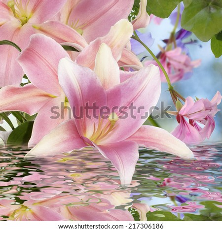 Exotic Lily.Japanese Water Lily - stock photo