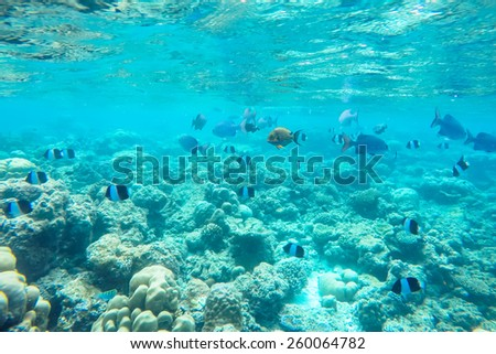 exotic marine life near Maldives island, tropical summer vacation concept - stock photo