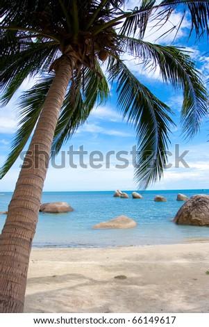 exotic palm beach - stock photo