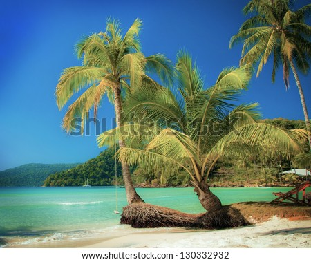 Exotic palm trees on summer beach