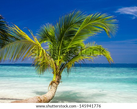 Exotic palm trees on white sand beach. Maldives