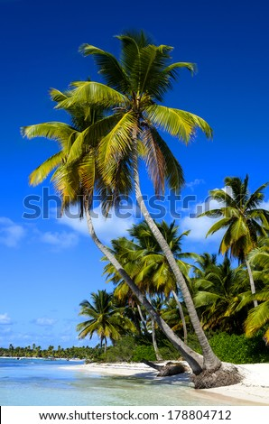 Exotic palms on sandy Caribbean beach in Dominican Republic - stock photo