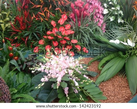 Exotic plant display with bright orange and pink flowers - stock photo