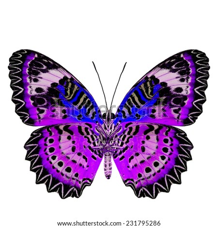 Exotic Purple Butterfly with blue wings (Leopard Lacewing) in fancy color profile isolated on white background - stock photo