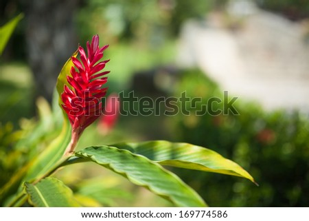 exotic red flower - stock photo