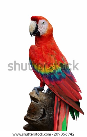 Exotic Red Macaw bird in half body isolated on white background