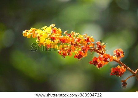 exotic red orange yellow flower from costa rica - stock photo