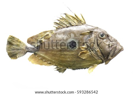 exotic sea fish on the white background