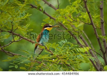 Exotic tropical bird - stock photo
