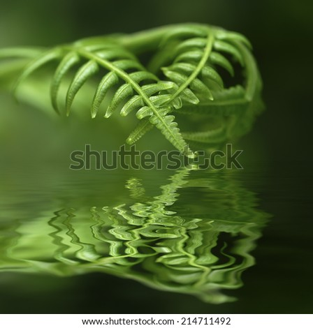 Exotic tropical ferns with shallow depth of field (dof)  - digital composite,  water reflection and ripple effects.