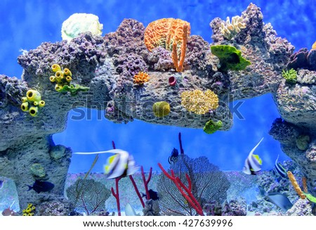 Exotic underwater world of shallow water coral reef. - stock photo