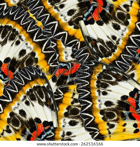 Exotic Yellow and Black with Red spots background made of Leopard Lacewing  butterfly's wing texture - stock photo