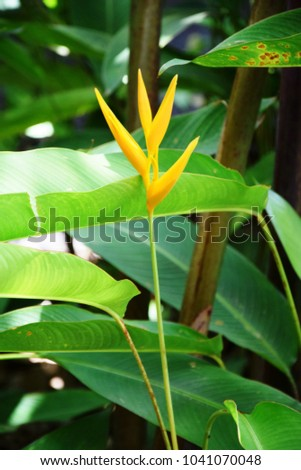 Exotic yellow flowers daintree rainforest queensland stock photo exotic yellow flowers in daintree rainforest queensland australia mightylinksfo