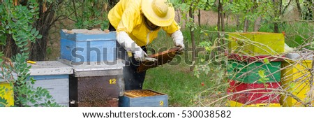 Experienced beekeeper inspecting health state of apiary at the end of summer season.