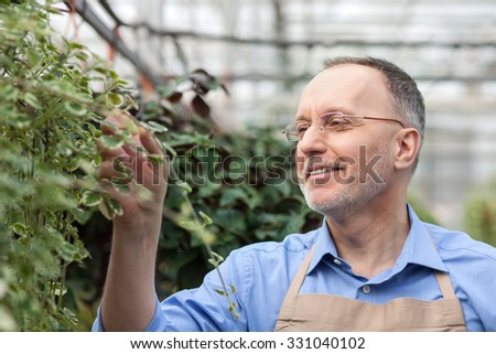 Experienced senior garden worker is standing at greenhouse. He is touching plant and looking at it with joy. The man is smiling happily - stock photo
