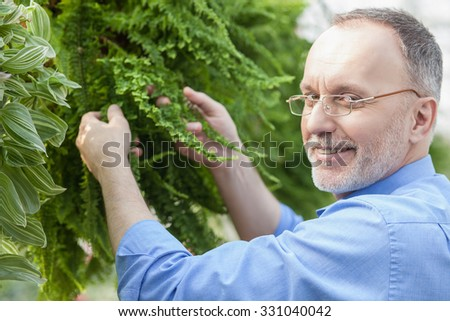 Experienced senior gardener is working at greenhouse. He is standing and holding leaves of green plant. The man is looking at camera and smiling - stock photo