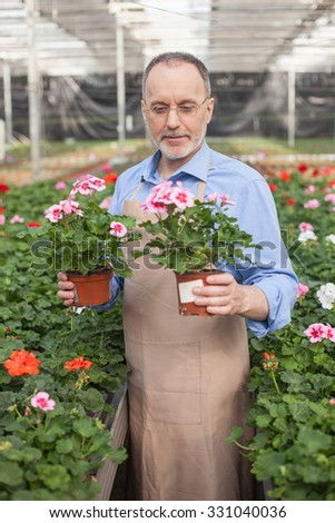 Experienced senior gardener is working at greenhouse. He is standing and holding two flowerpots. The man is looking at plant and smiling - stock photo