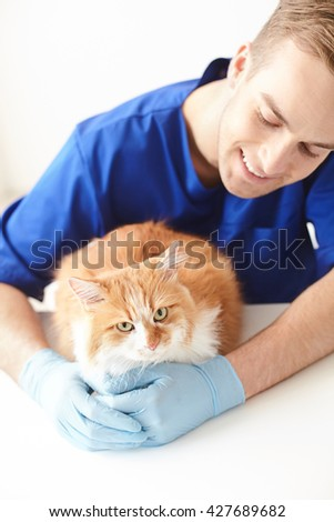Experienced young vet is doing checkup of pet - stock photo
