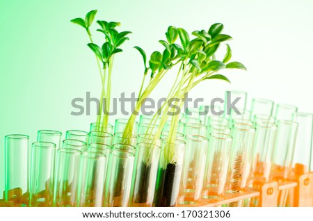 Experiment with green seedlings in the lab - stock photo