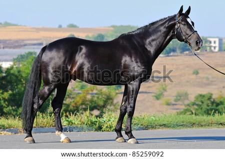 Exterior of black stallion - stock photo