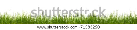 Extra large horizontal strip of grass, dirt, and roots isolated on white background. - stock photo