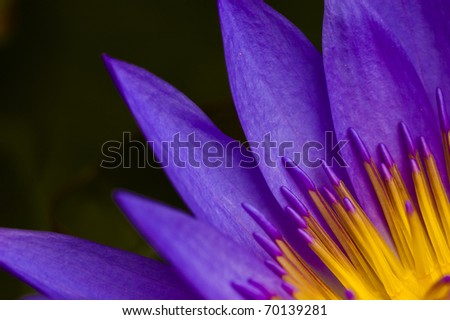 extreme close up of a lotus flower - stock photo