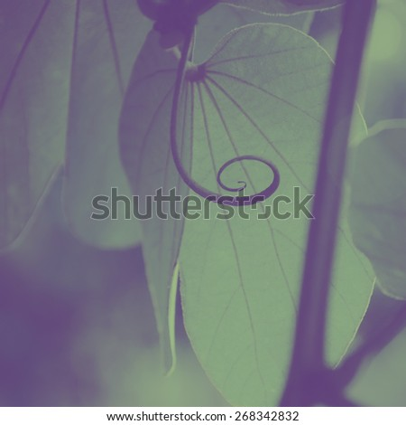 Extreme close up of a plant. An abstract nature background. - stock photo