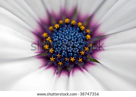 extreme close up of daisy - stock photo