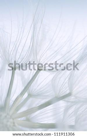 Extreme close-up of dandelion. Toned image, shallow DOF. - stock photo