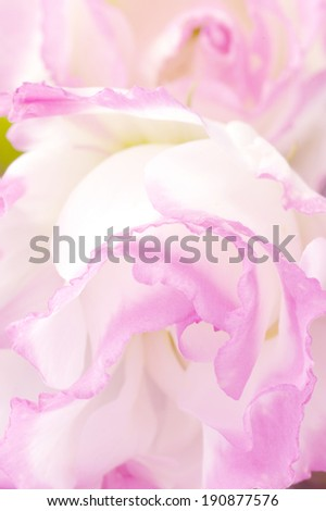 Extreme close-up of eustoma flower.