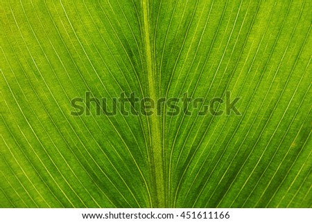 Extreme close-up of fresh green leaf as background - stock photo
