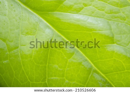 Extreme close-up of fresh green leaf as background. Macro green leaf background