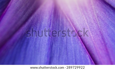 extreme close up shot of natural, violet flower texture. vivid petal background  - stock photo