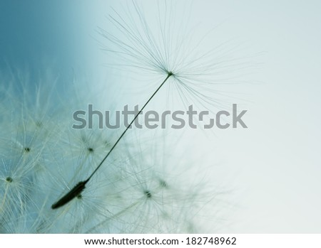 Extreme close up view of dandelion flower with seed